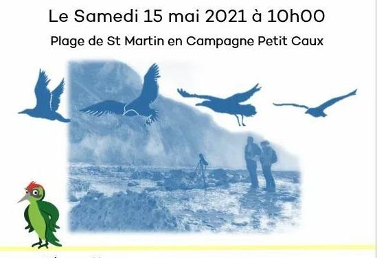 Activité découverte des oiseaux du littoral à Petit Caux
